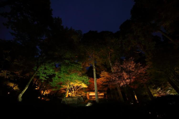 大興善寺の日没直後の紅葉ライトアップ