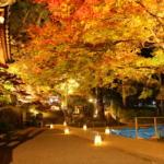 2017年大興善寺の紅葉ライトアップ