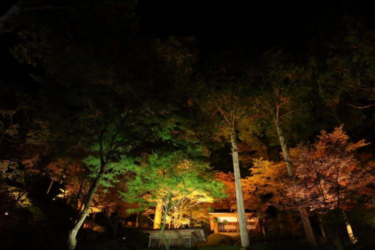 夜の大興善寺ライトアップ