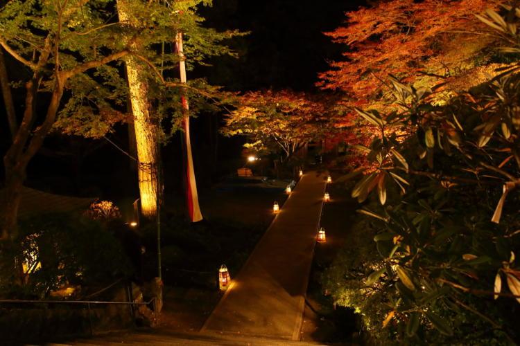 大興善寺の紅葉ライトアップ2017