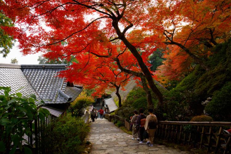 大興善寺の紅葉、契園入り口