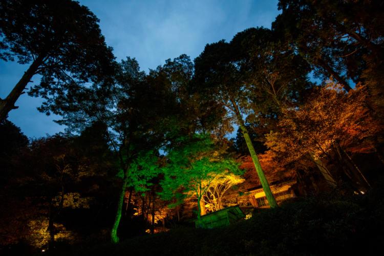大興善寺の契園の夕刻ライトアップ