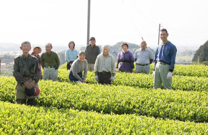 園部製茶の茶畑を管理する人々